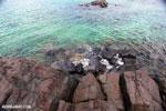Tampolo Marine Park [madagascar_masoala_1088]