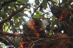 Female black lemur [madagascar_nosy_komba_0223]