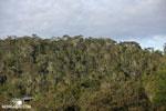 Rainforest of Andasibe-Mantadia National Park in Madagascar [madagascar_perinet_0073]