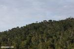 Rainforest of Andasibe-Mantadia National Park in Madagascar [madagascar_perinet_0075]