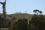 Deforestation near Andasibe-Mantadia National Park in Madagascar [madagascar_perinet_0084]