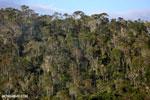 Rainforest of Andasibe-Mantadia National Park in Madagascar [madagascar_perinet_0098]