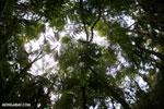 Rainforest in Perinet [madagascar_perinet_0186]