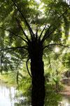 Tree fern in Madagascar