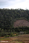 Deforestation near Andasibe-Mantadia National Park [madagascar_perinet_0262]
