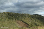 Deforestation near Andasibe-Mantadia National Park [madagascar_perinet_0266]