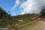 Sherritt's pipeline road [madagascar_perinet_0271]