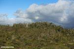 Montane forest in Andasibe-Mantadia National Park along the Sherritt pipeline road [madagascar_perinet_0295]