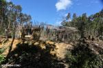 Hut Eastern Madagascar