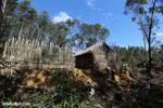 Hut Eastern Madagascar [madagascar_perinet_0422]