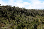 Mantadia forest [madagascar_perinet_0609]