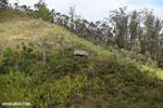 Forest hut in Madagascar