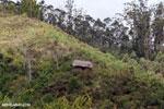 Forest hut in Madagascar [madagascar_perinet_0611]
