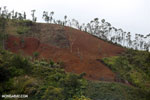 Slash and burn deforestation of Madagascar's rainforest