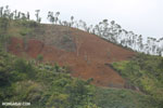 Slash and burn deforestation outside Tamatave