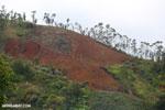 Slash and burn deforestation outside Perinet