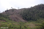 Slash and burn deforestation in Madagascar [madagascar_tamatave_0151]