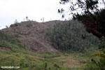 Slash and burn of Madagascar's rainforest [madagascar_tamatave_0160]