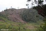 Slash and burn clear-cutting of Madagascar's rainforest [madagascar_tamatave_0161]