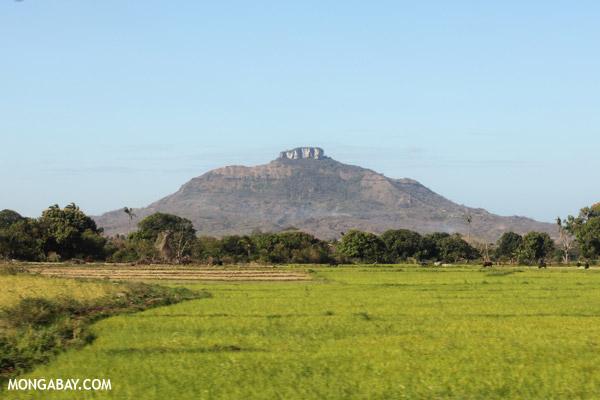 Rice fields near Antsiranana