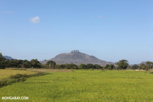 Rice paddies near Diego Suarez