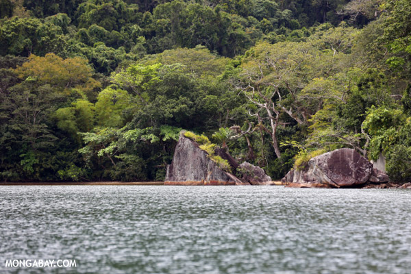 Rainforest on Nosy Mangabe
