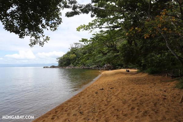 Beach on Nosy Mangabe
