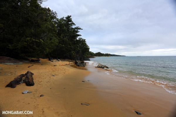 Beach on the Masoala Peninsula