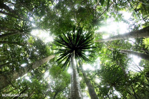 Rainforest in Madagascar.