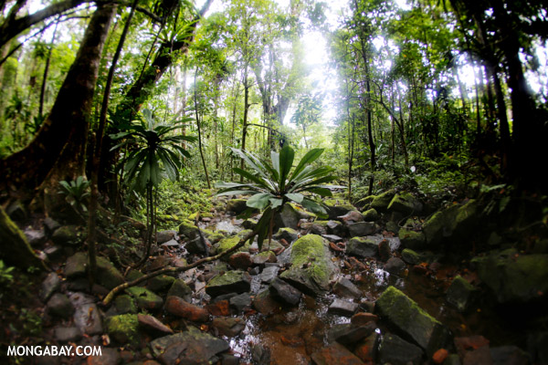 Madagascar rainforest