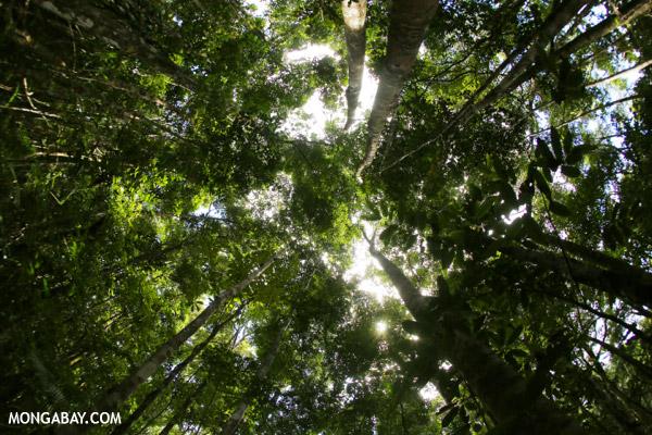 Rainforest near Makira in Madagascar.