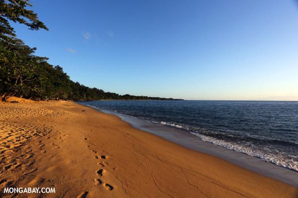 White sand beach at sunset on Madagascar's Masoala Peninsula