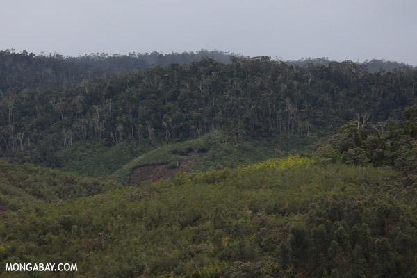 Deforestation near Andasibe-Mantadia National Park in Madagascar