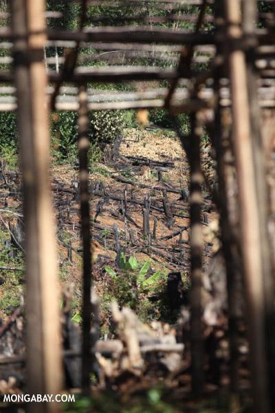 Slash-and-burn in Madagascar