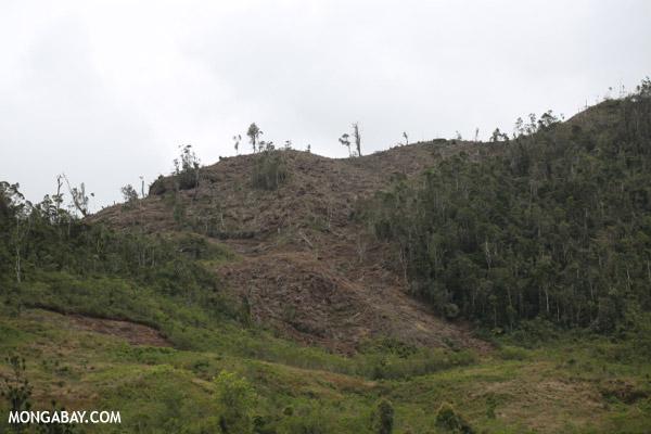 Slash and burn clear-cutting of Madagascar's rain forest