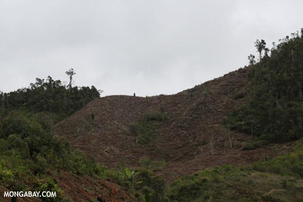 Slash and burn of Madagascar's rainforest