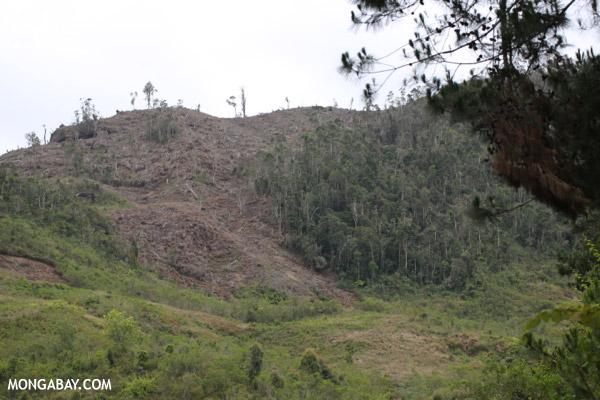 Slash and burn clear-cutting of Madagascar's rainforest
