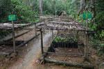 Mitsinjo reforestation nursery [mad_08]