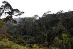 Mantadia rainforest [madagascar_0851]
