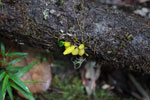 Plants [madagascar_0862]