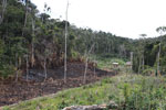 Tavy or slash-and-burn agriculture in Madagascar [madagascar_0976]