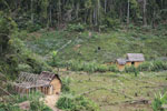 Forest clearing near Mantandia [madagascar_1006]