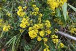 Yellow flowers [madagascar_1031]