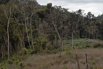 Forest clearing near Mantandia [madagascar_1070]