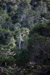 Mantadia rain forest [madagascar_1136]