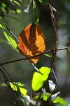 Leaves in Perinet