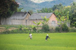 Rice cultivation in Madagascar [madagascar_1672]