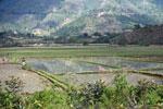 Rice paddies in Madagascar [madagascar_1674]