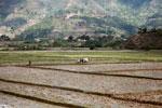 Working rice fields in Madagascar [madagascar_1676]