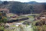 Rice paddies in Madagascar [madagascar_1686]